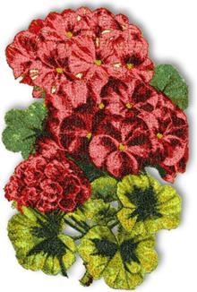 Red geranium, machine embroidery design.