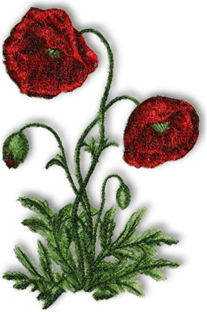 Advanced Embroidery Designs  Wild Poppy