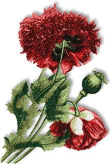 Taffeta Red Poppy