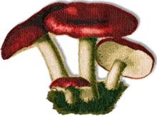 Russula Mushrooms