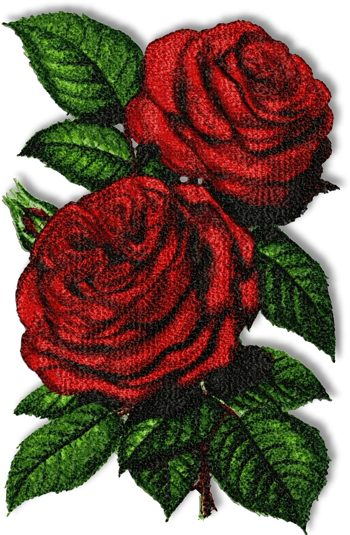 Advanced Embroidery Designs - Duchess Of Bedford Rose