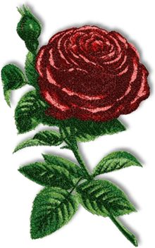 Rose of Piedmont
