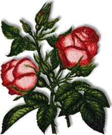 Catherine Rose