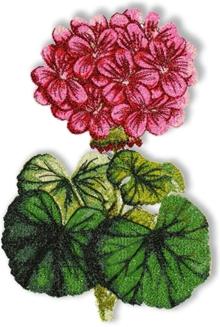 Geranium Machine Embroidery Design